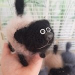 Котенок Сёмка