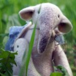 Игрушка из шерсти Слон