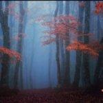 Туманный лес фотофон 40*60 см, тканый винил, не бликует.