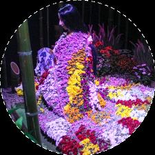 Кику-нингё. Японские куклы из цветов
