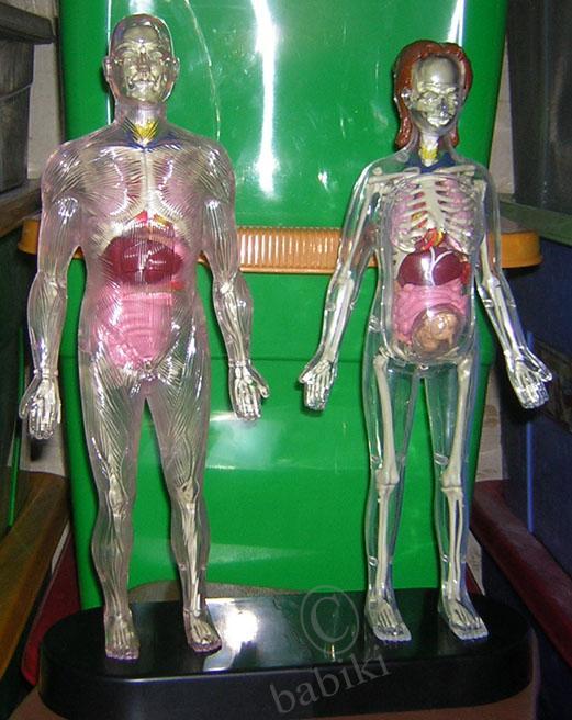 прозрачная резиновая кукла