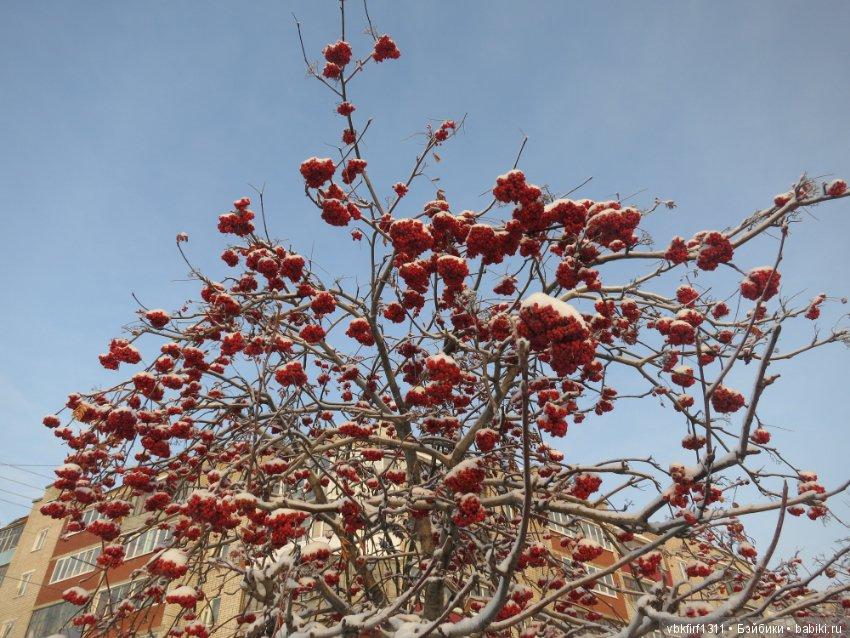 алой дерево фото