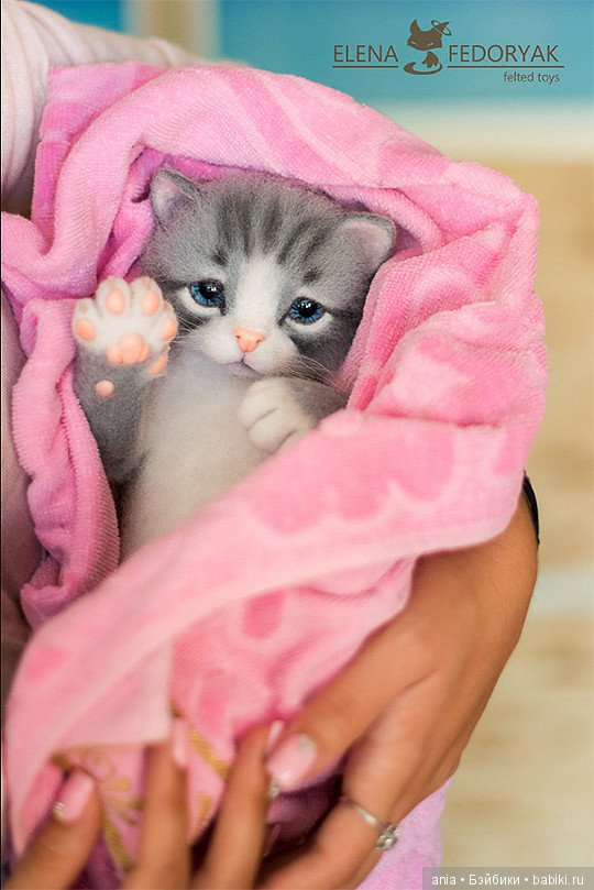 живые картинки котята
