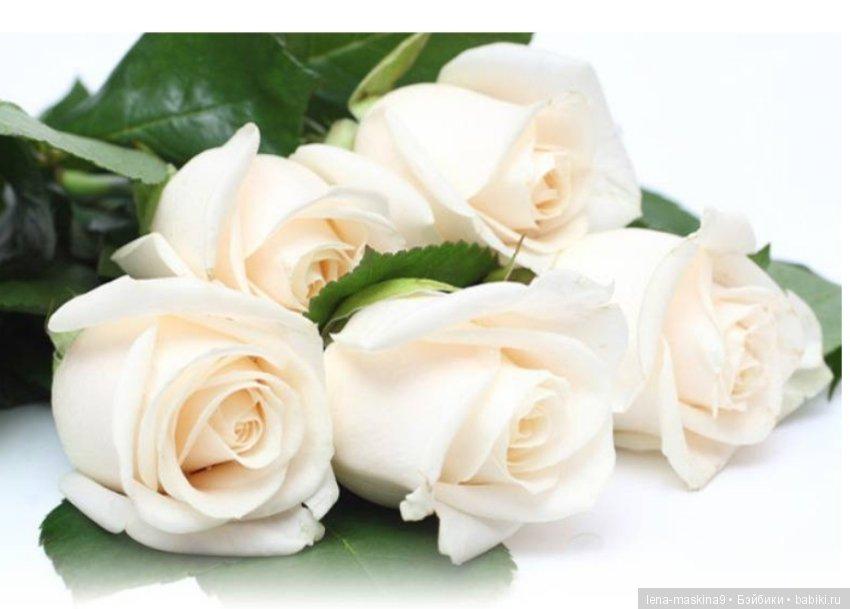 С днем рождения открытки розы белые
